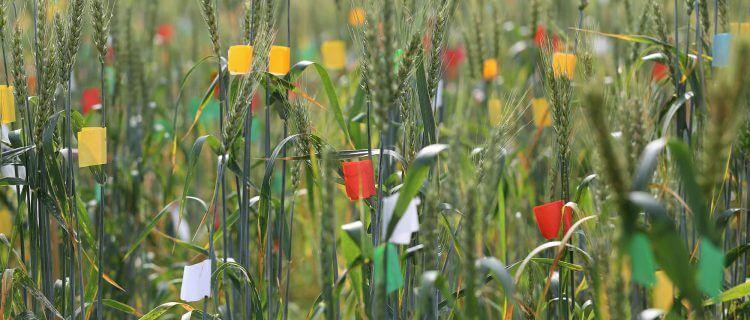 Foto Pflanzen Markierungen